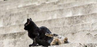 katter som leker två Arkivbilder