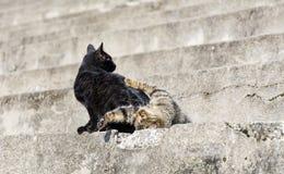 katter som leker två Arkivbild