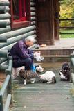 katter som matar man den gammala parkstrayen Arkivfoto