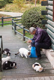 katter som matar man den gammala parkstrayen Arkivfoton