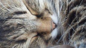 katter som sover på säng Royaltyfri Foto