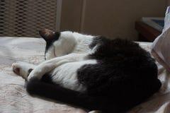 katter som sover på säng Royaltyfri Fotografi