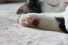 katter som sover på säng Fotografering för Bildbyråer