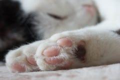 katter som sover på säng Arkivbild