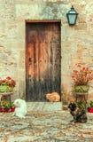 katter som vilar på en fasad Arkivfoton