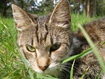 katter stänger sig upp arkivfoton