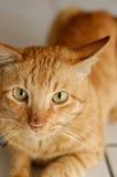 Katter stänger sig upp Arkivfoto