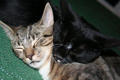 Katter Tom & Jake Snuggle royaltyfri foto