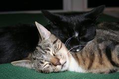 Katter Tom & Jake Snuggle II royaltyfria foton