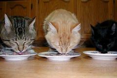 katter tre Arkivfoto