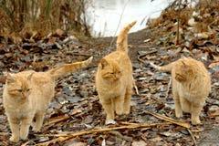 katter tre Arkivfoton