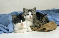 katter tre royaltyfri bild