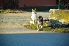 katter två Arkivbilder