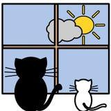 katter två Royaltyfri Bild