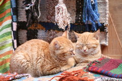katter två Arkivbild