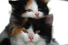 Katter vänder mot royaltyfria foton