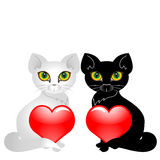 katter värmer upp Fotografering för Bildbyråer