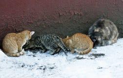 Katterna äter Arkivfoto