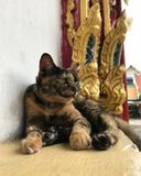 Katterna Royaltyfri Bild
