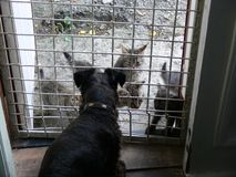 Katterna kom att besöka hunden arkivfoton
