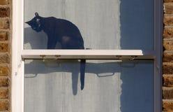 kattfönster Fotografering för Bildbyråer