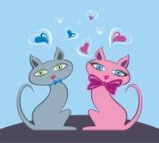kattförälskelse Arkivfoto