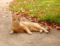 kattfall royaltyfri foto