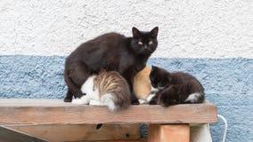 Kattfamilj - katt och kattungar Arkivbild