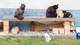 Kattfamilj - katt och kattungar Fotografering för Bildbyråer