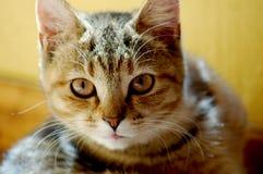 kattfamiljhusdjur Arkivfoton