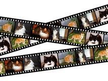 kattfilmstrips arkivfoton