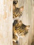 kattfjäder Arkivbild