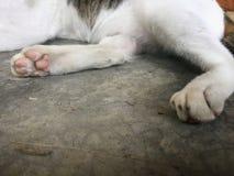 Kattfot på cementbottenvåning Fotografering för Bildbyråer