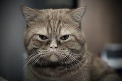 kattframsida arkivfoton