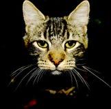 Kattframsida i mörkret royaltyfri bild