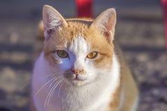Kattframsidan och älskvärt behandla som ett barn katten Arkivfoton