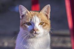 Kattframsidan och älskvärt behandla som ett barn katten Royaltyfria Bilder