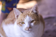 Kattframsidan och älskvärt behandla som ett barn katten Royaltyfri Bild
