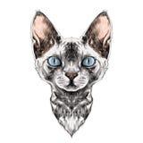 Kattframsidan skissar vektorn vektor illustrationer