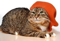 kattfransmanmålare arkivfoto
