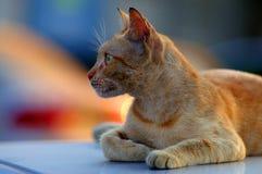 kattgata arkivbild