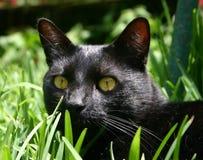 kattgräs Arkivfoto