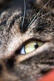 Kattgrå färger och vit royaltyfri fotografi
