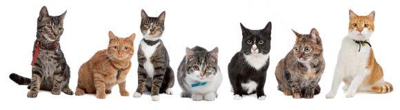 kattgrupp Arkivfoto