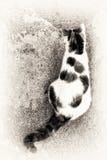Katthärmande på en vagga Royaltyfri Foto
