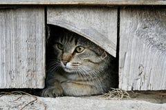 Katthål Arkivbild