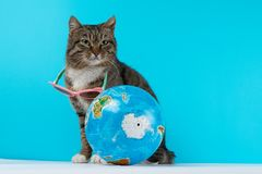 Katthandelsresande katten möter på semester arkivfoto