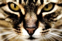 katthemhjälp arkivbilder