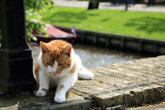 katthårred Arkivbild