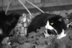 katthund Fotografering för Bildbyråer
